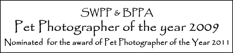 Cath Lewis - Pet Photographer of the year